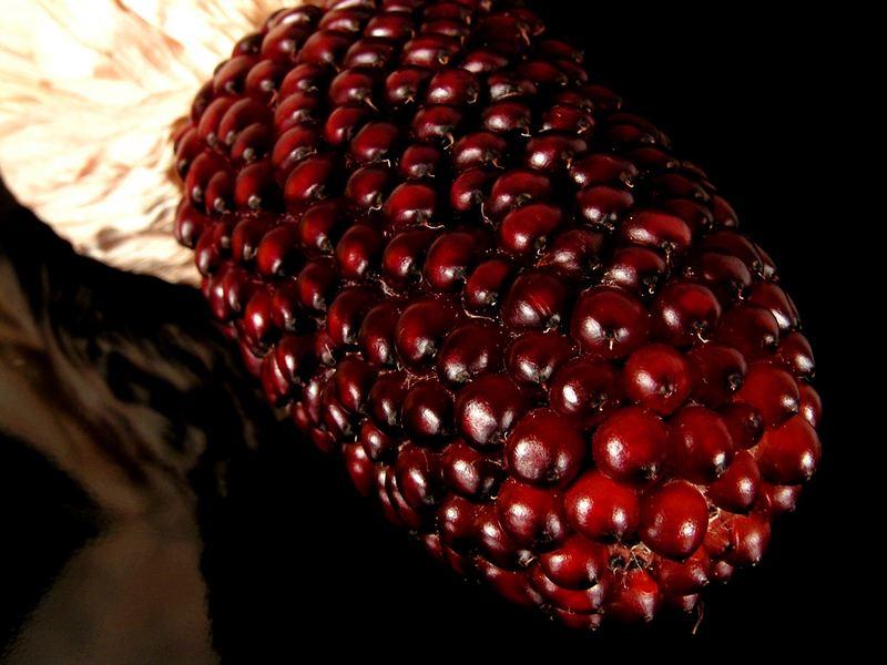 Erdbeermais (Zea mays)