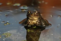 Amphibien, Reptilien