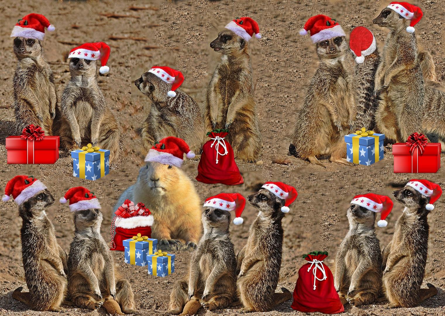 Erdmännchens Weihnachten