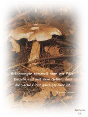 Erfahrungen sammelt man wie Pilze . . .
