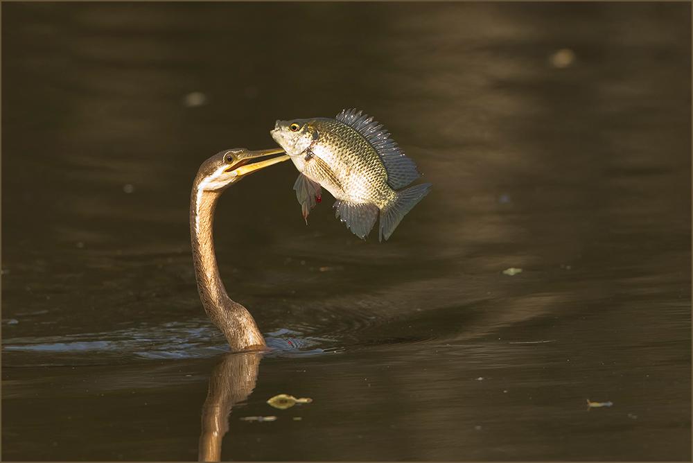 Erfolgreicher Fischer