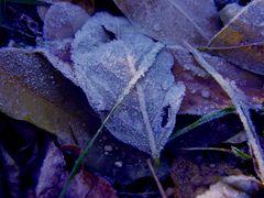 Erfroren