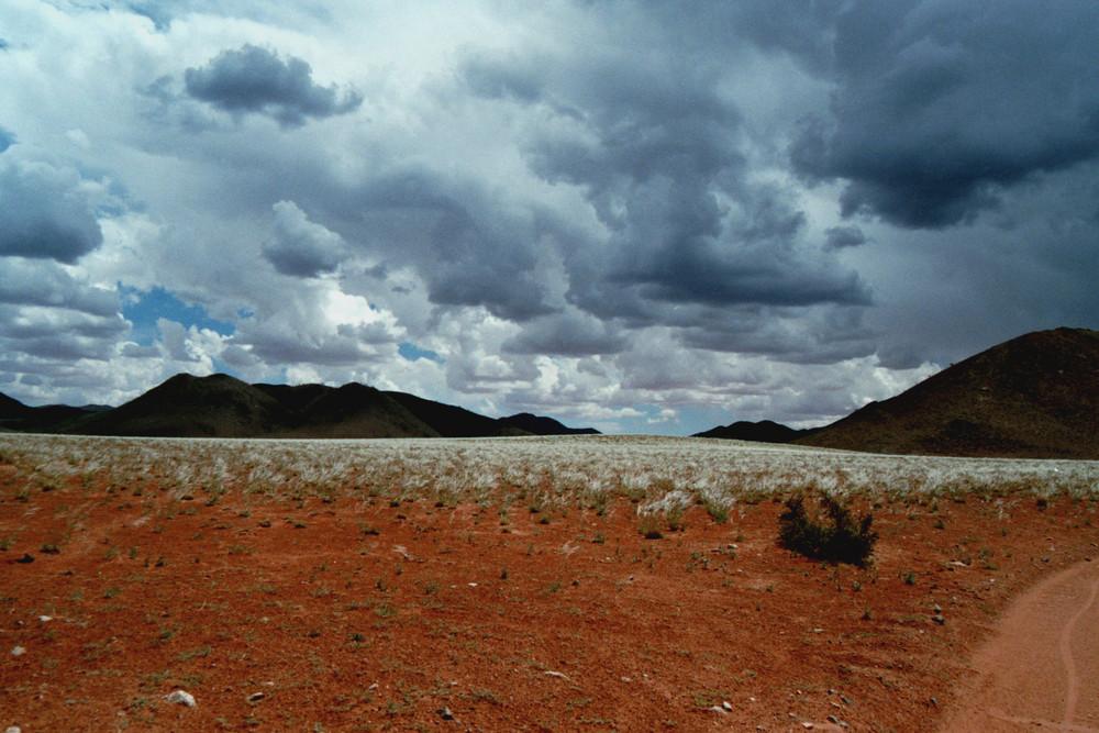 Ergrünen der Wüste Namibias