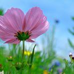 Erhaben im Blumenmeer