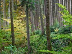 Erholungsgebiet Wald