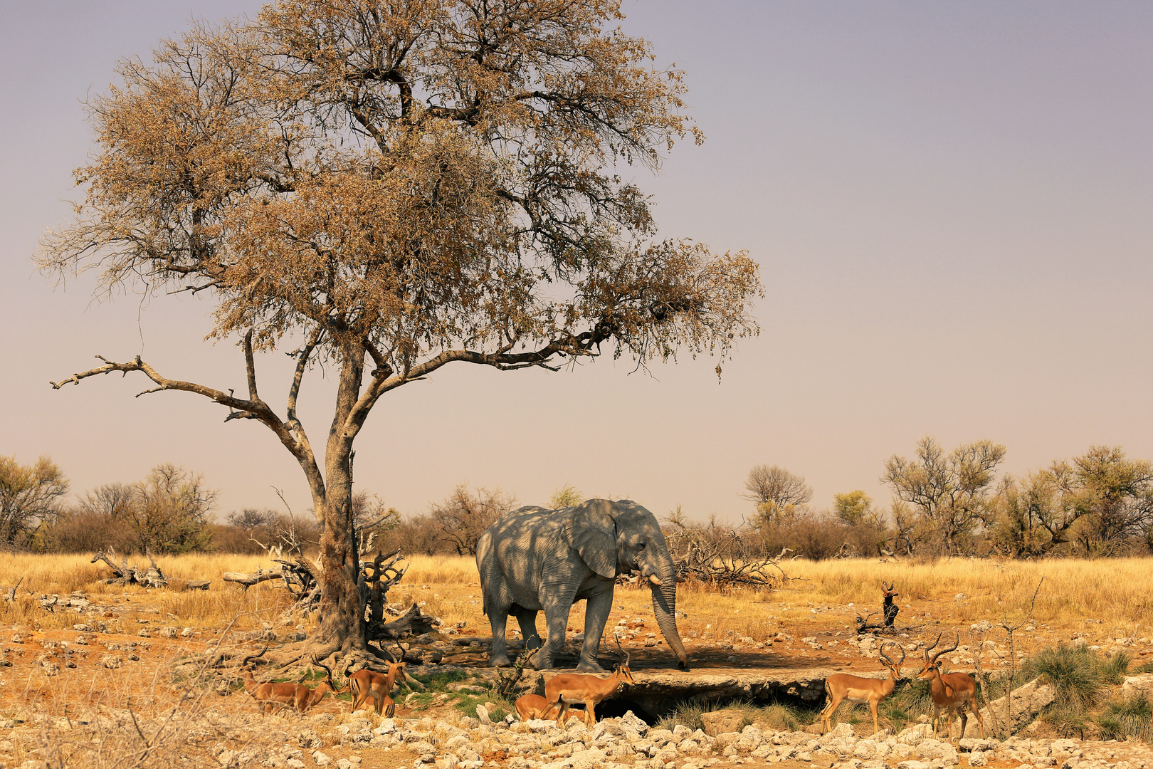 Erinnerung an Afrika ...