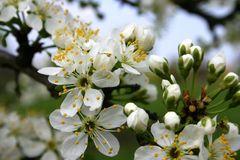 Erinnerung an den letzten Frühling