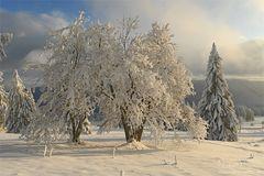 Erinnerung an den Schnee