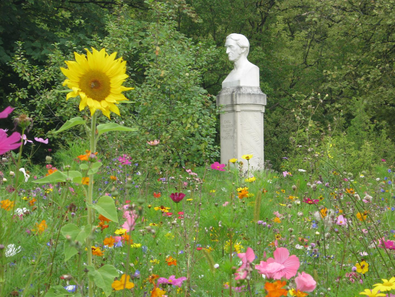 Erinnerung An Eine Schöne Blumenwiese Foto Bild Landschaft