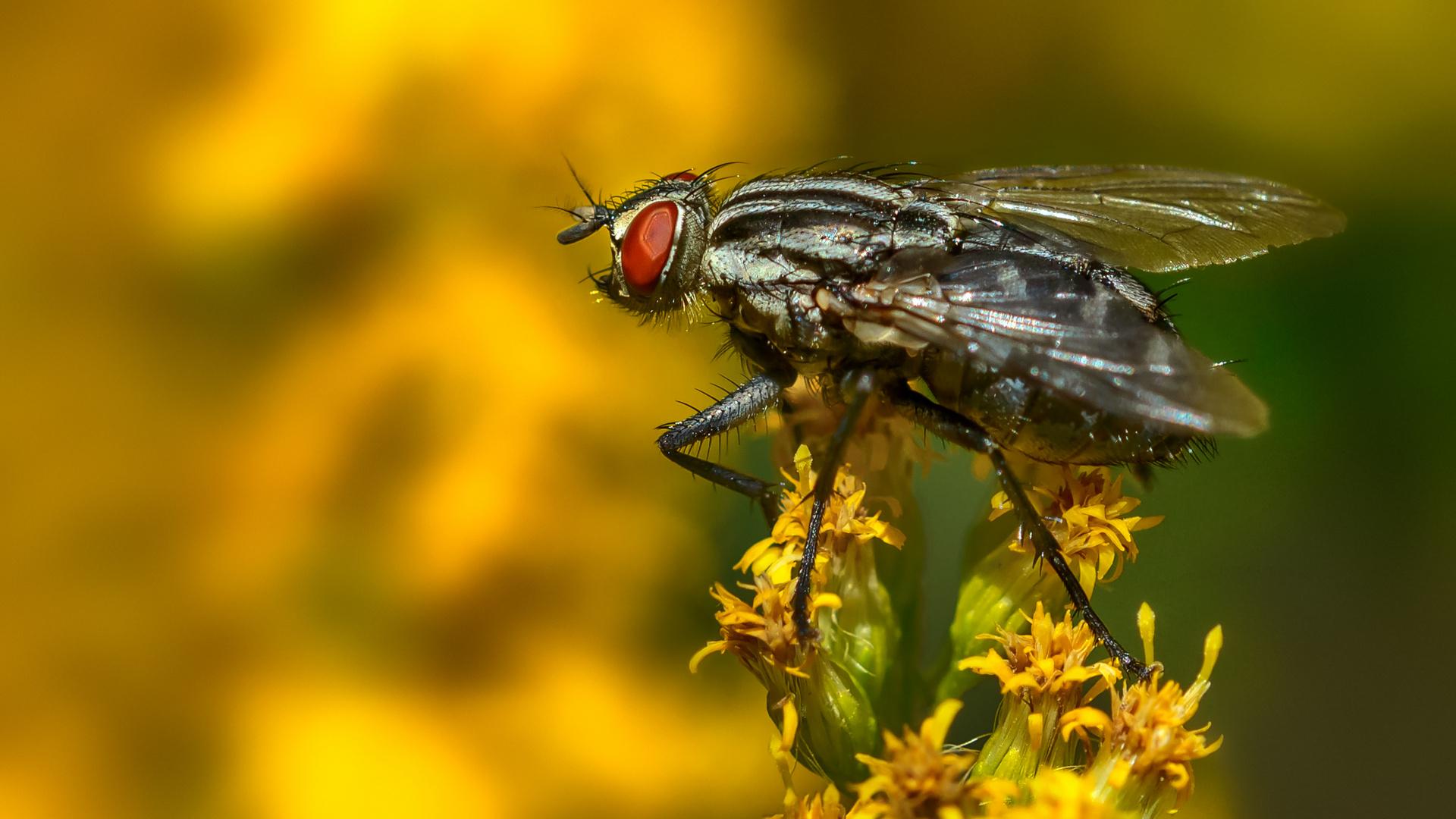 Erinnerung mit Fliege
