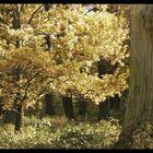 Erinnerungen an den Herbst 2