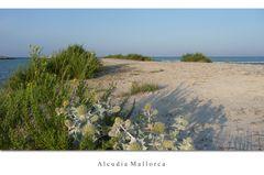 Erinnerungen an Mallorca