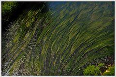 Erinnerungen sind Wasserpflanzen