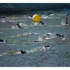 Erlangen-Triathlon Schwimmen