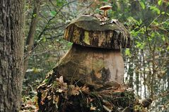 Erlenholzpilz Bild 2