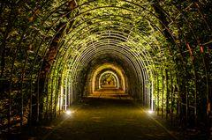 Erleuchteter Pflanzentunnel im nächtlichen Kolberg (Polen)