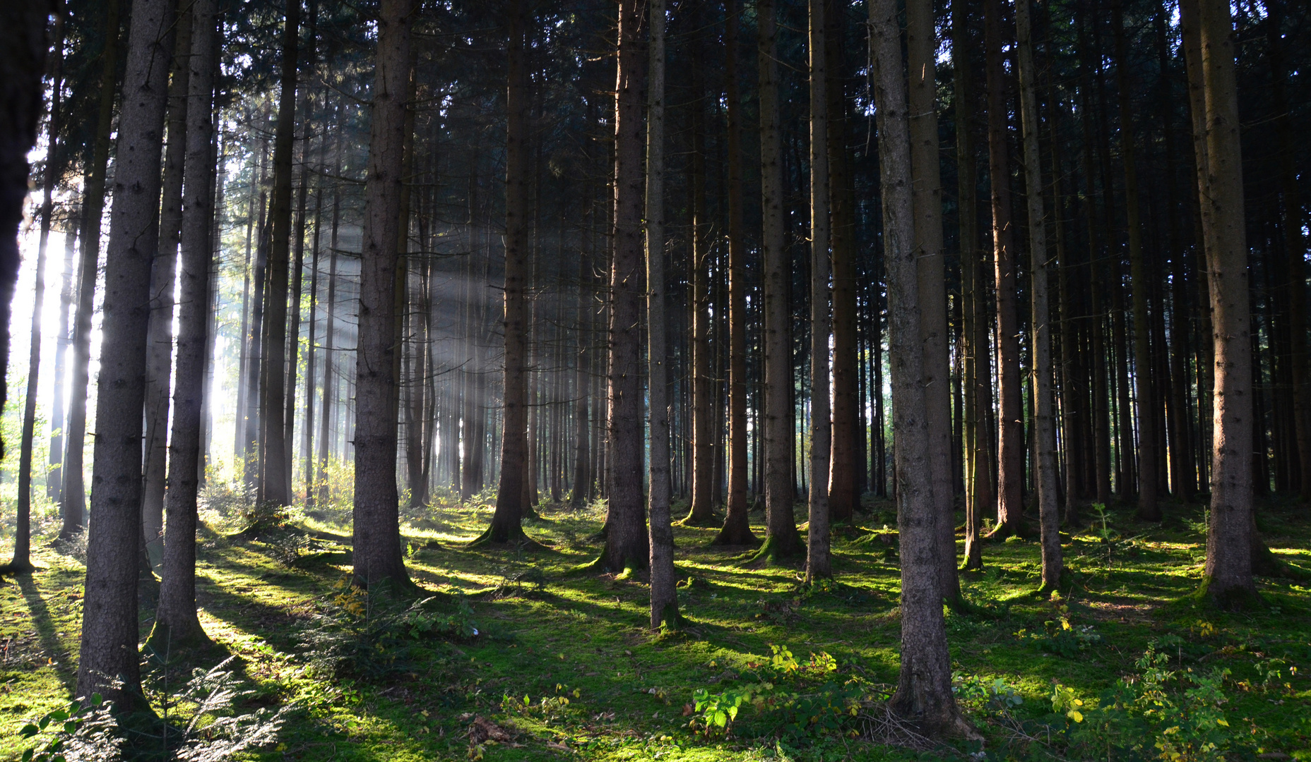 Erleuchtung des Waldes