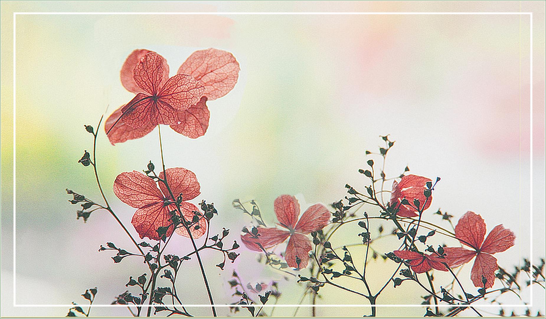 Ernestina en flor