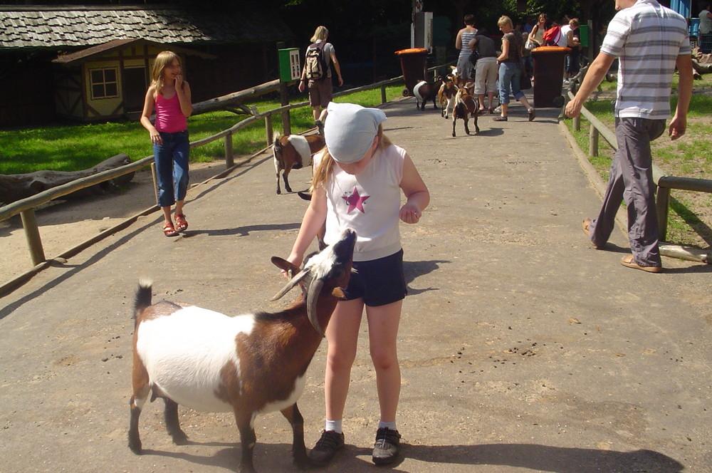 Ernstes Gespräch zwischen Kind und Ziege...