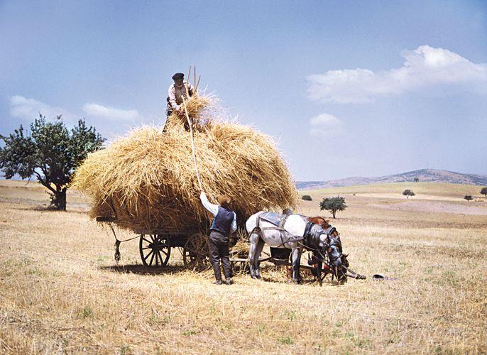 Ernte in Anatolien