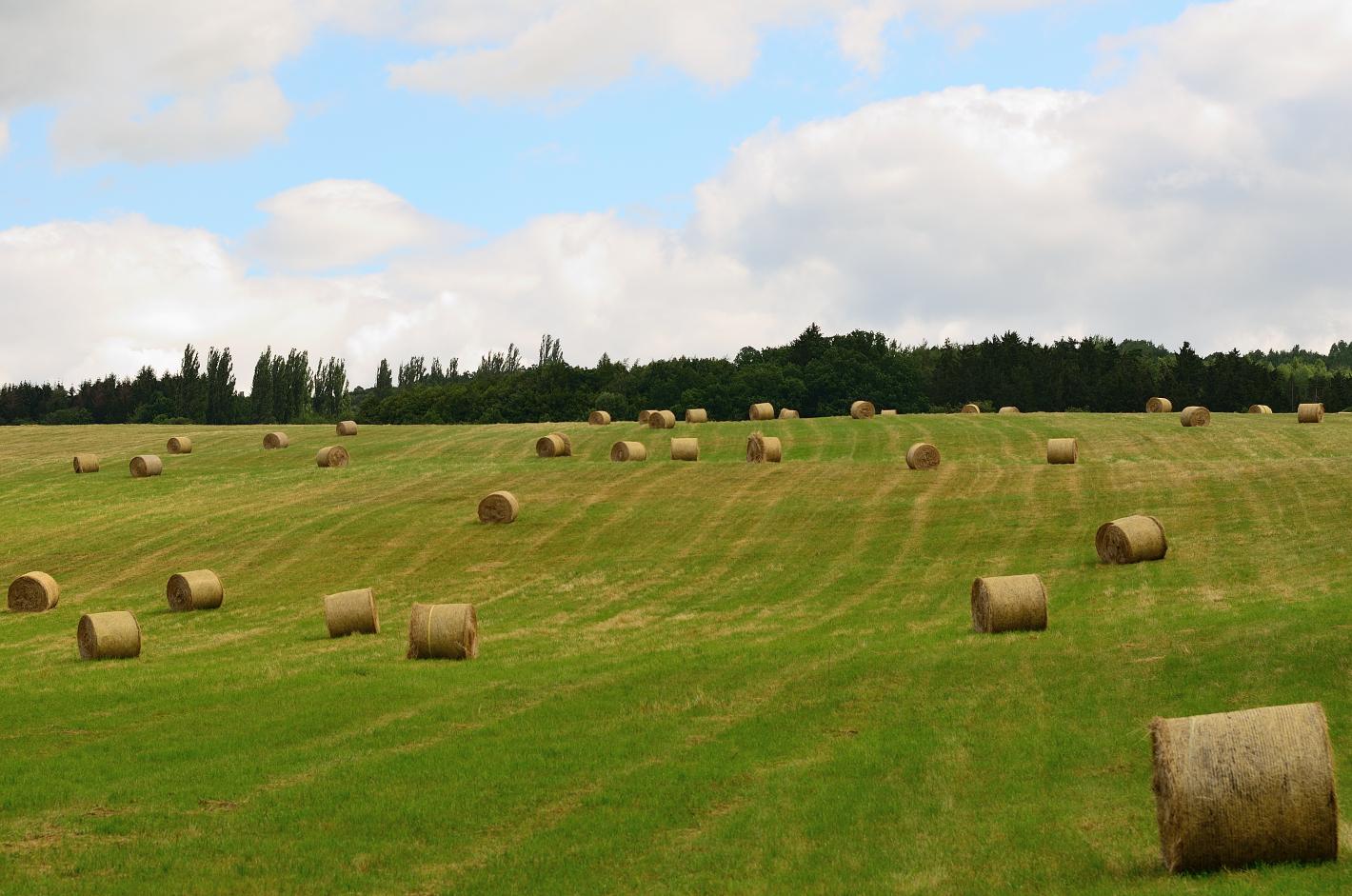 Erntezeit,  harvest time, tiempo de cosecha