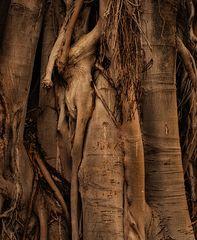 eros of trees
