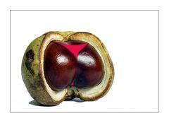 Erotic Chestnut