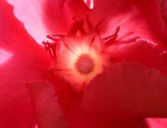 Erotik einer Blüte