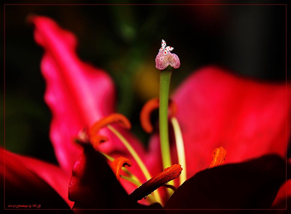 Erotikflowers