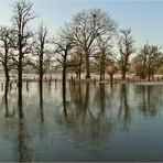 Erst das Hochwasser, dann der Frost ...