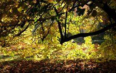 Erst wenn die Sonne scheint, zeigt sich die wahre Schönheit des Herbstes