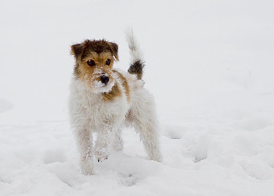 Erste Berührung mit Schnee ..