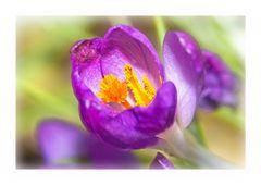 Erste Blüten im Garten