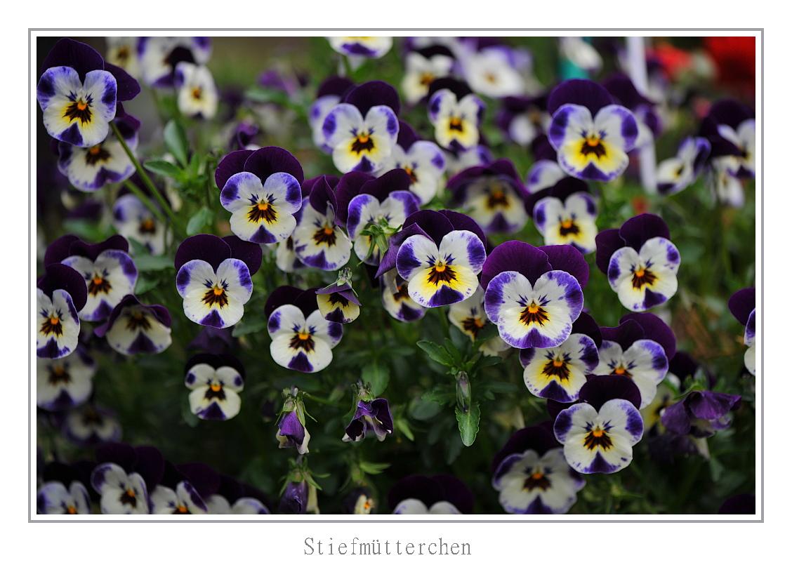 Erste Blumen Foto Bild Fruhling 12 03 2018 Motive Bilder Auf