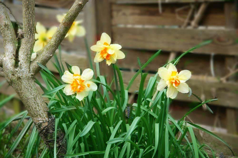 Erste Blumen Fruhling Foto Bild Natur Pflanzen Youth Bilder
