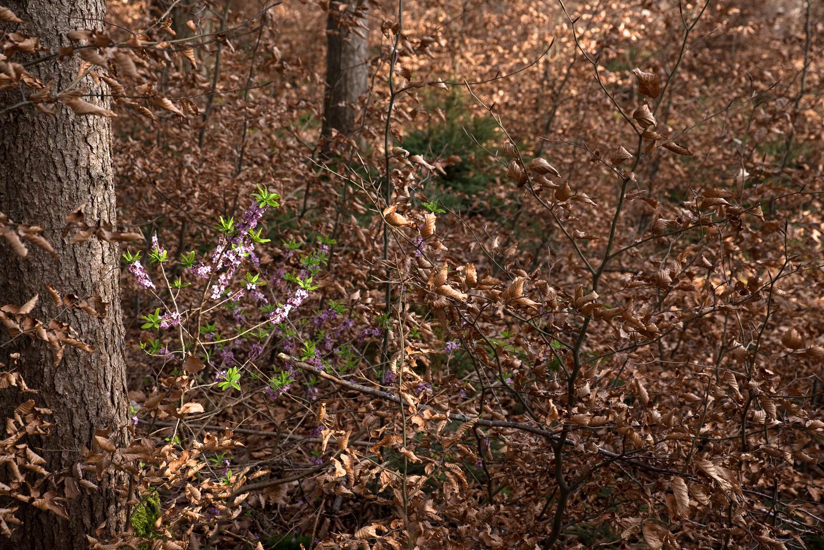 Erste Blumen Im Wald Foto Bild Landschaft Wald Fruhling Bilder