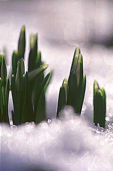 Erste Boten des Frühlings...