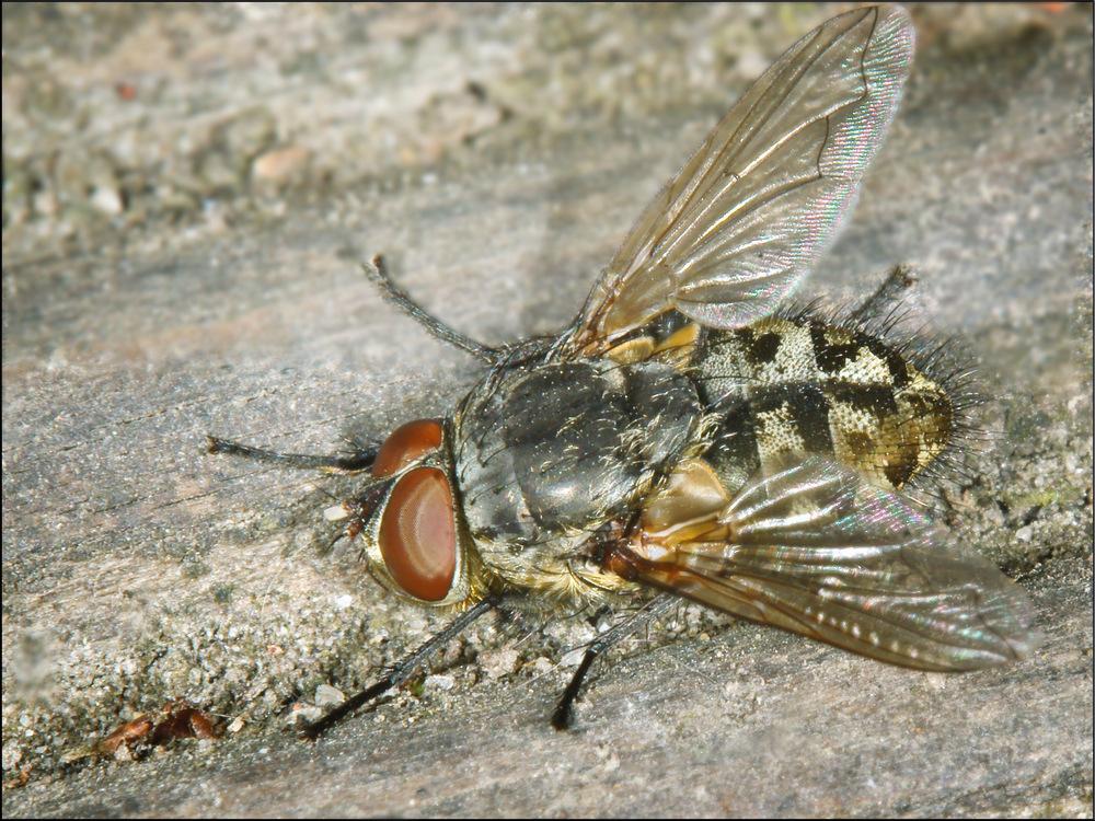 Erste Fliege 2010