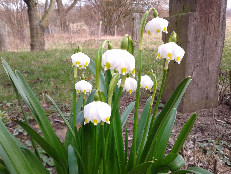 Erste Frühjahrsboten