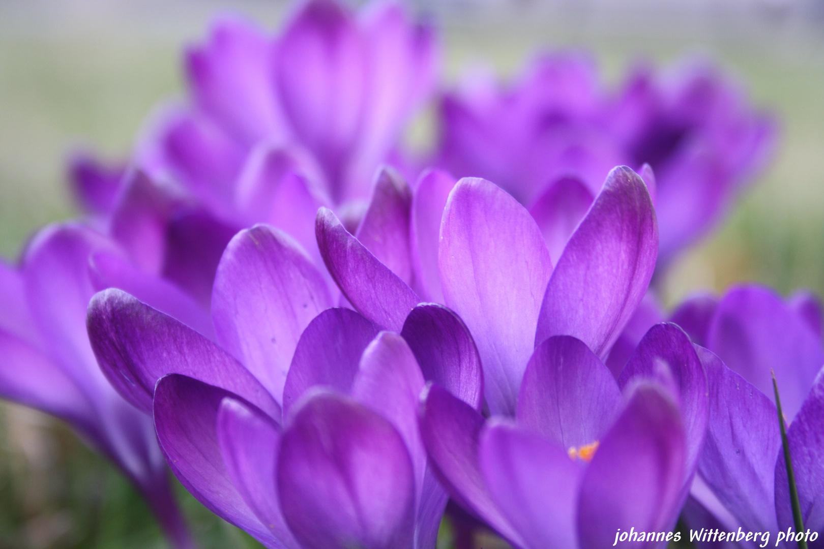 Erste Fruhlingsblumen Foto Bild Natur Pflanzen Youth Bilder