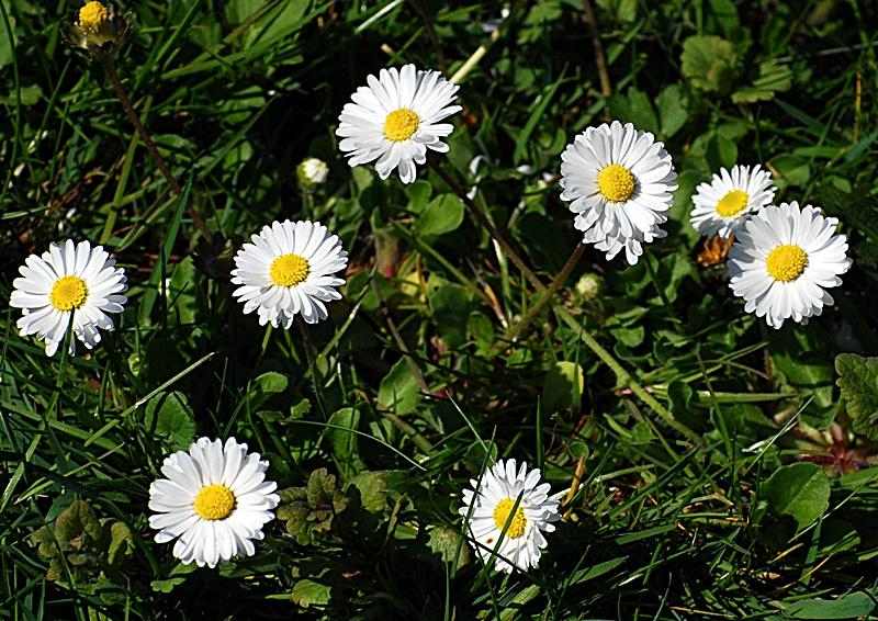 Erste Fruhlingsblumen Foto Bild Pflanzen Pilze Flechten