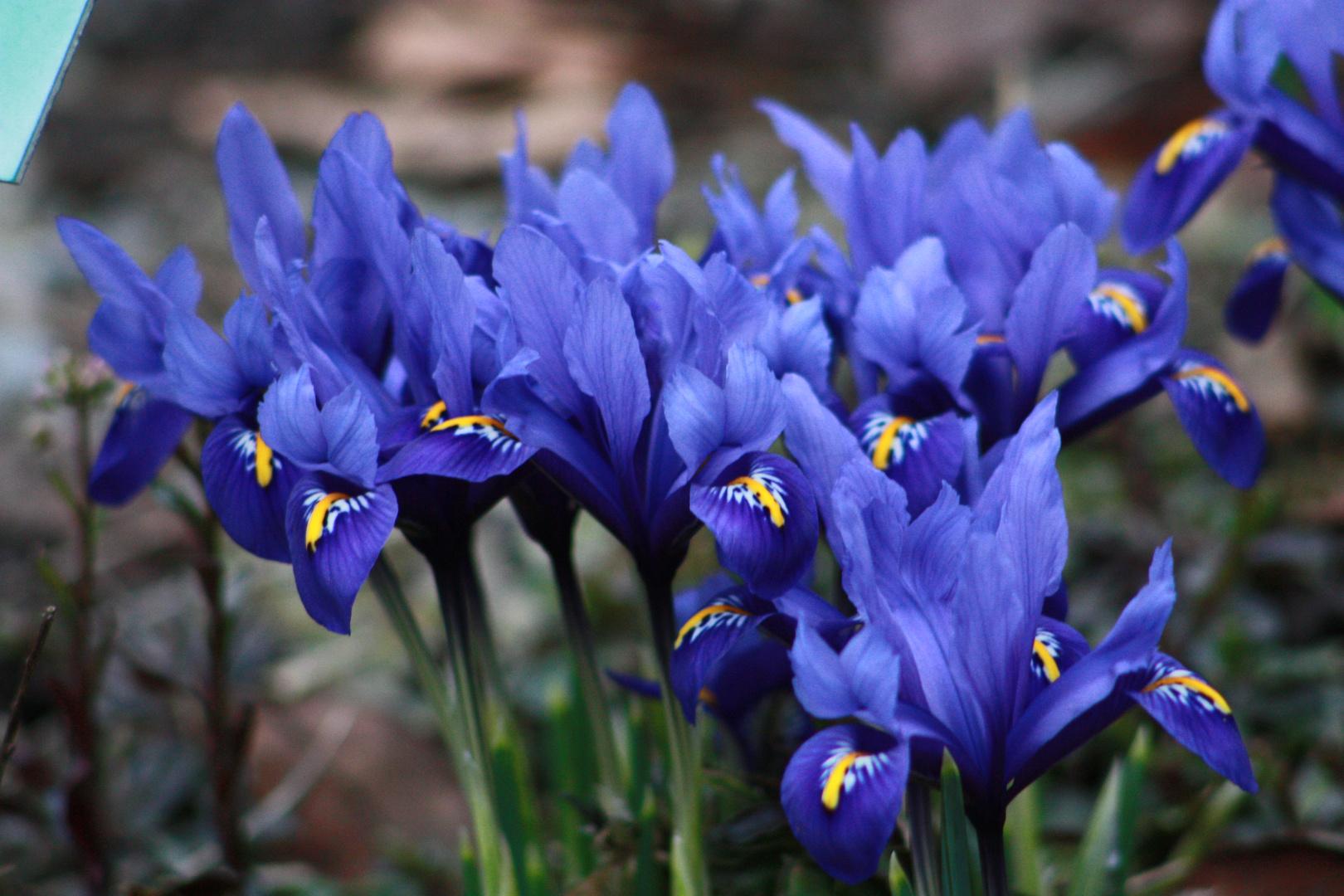 Erste Fruhlingsblumen Foto Bild Jahreszeiten Fruhling Natur