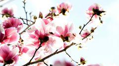 erste Frühlingsboten