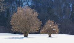 Erste Frühlingsgefühle kommen auf ( Golfplatz Interlaken CH )