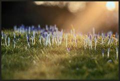 erste Frühlingstage 2