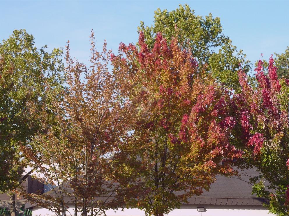 erste Herbsttöne