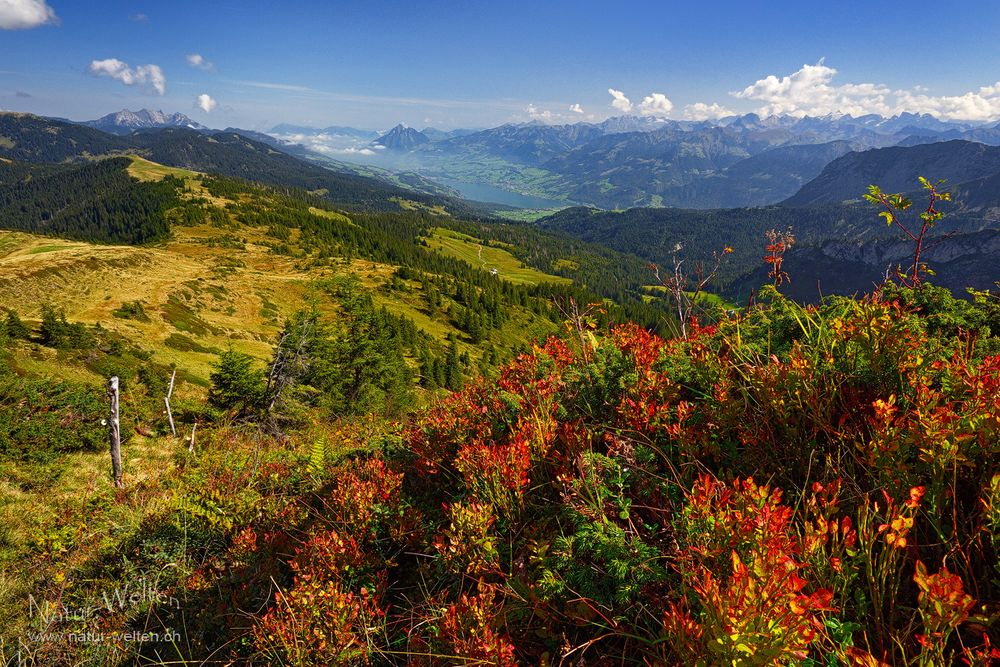 Erste leuchtende Herbstfarben