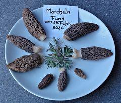 Erste Morcheln . . . . . . . morilles