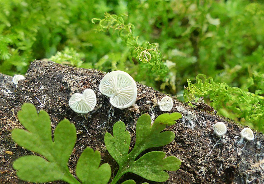 Erste Pilzchen