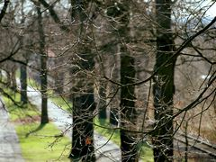 Erste Sonnenstrahlen auf die Baumspitzen